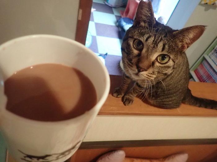 猫カフェ 音々猫
