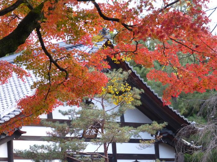 祇園 さゝ木