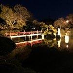 100160455 - 夜のお庭