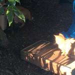 100231024 - トロ箱に乗っかる仔猫の図