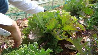 エルバ ダ ナカヒガシ - 採れたての野菜をお客様に提供する事にこだわるシェフ