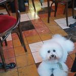 カフェレストラン フィガロ - カフェ・フィガロの床
