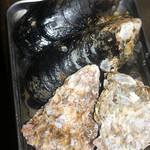 嶋津鮮魚店 - 瀬戸貝、牡蠣