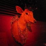 アマランス ラウンジ - 壁には鹿の剥製。