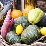 畑舎 - 野菜集合