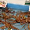 マル海渡辺水産 ハーバーホール海 - 料理写真:ウヨウヨ~♪(*≧з≦)