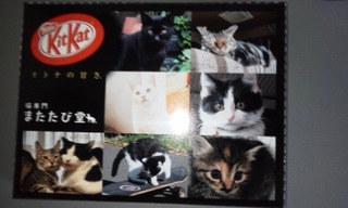 猫専門 またたび堂 - ノベルティのキットカット。ねこさんは、お店で時々 ねこ自慢写真コンテストとかやってるので、その時のだと思うミャ。