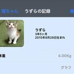 フーデリー - 室内飼い猫3号 うずらちゃん♀