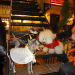 カフェ ラ・ボエム - Doggie's Halloween Party!!!