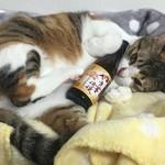 フーデリー - ネットに出てた里親募集で見つけて貰い受けて来た猫ちゃん。佐賀県に迎えに行って連れて来ました。唯一野良経験のないお嬢様猫ちゃんです。