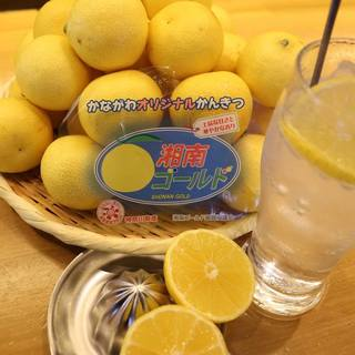 神奈川生まれの黄色いオレンジ【湘南ゴールド】