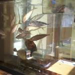 玄海鮨 - 水槽に 魚がたくさん