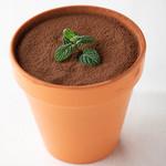 鉢植えティラミス