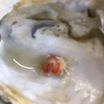 魚稚 - 牡蠣の中にかにさんこんにちゎ!