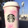 STARBUCKS COFFEE - ドリンク写真: