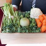 佛蘭西料理 名古屋 - カリフラワー、茎まで食べれるブロッコリーにメキャベツ、丸い大根、すなっぷえんどう