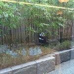 翠林 - ガラス越しにパンダと目があった?w