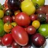 Osteria Luna Piccola - 料理写真:足柄 中戸川さんのカラフルミックストマト