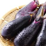 泉州産 一番取りの水茄子
