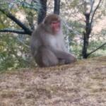 103022441 - 猿が群れなしてました(^^)