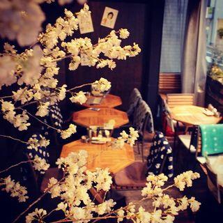 いよいよ『桜祭り』本番♪インドア花見もお薦め!!