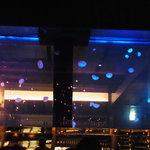 メデューサ - JerryFishの水槽