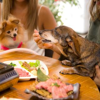 愛犬とご一緒にお食事を楽しめる解放感あふれるテラス席!!