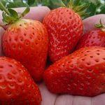 西浦農園 - 料理写真: