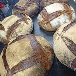 パン アトリエ クレッセント  - 料理写真:おなばけ小麦で起こした乳酸菌の種で焼き上げた「おなばけカンパーニュ」