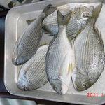 リストランテ・ヒロ - 本日とれとれ鮮魚(まなじ)