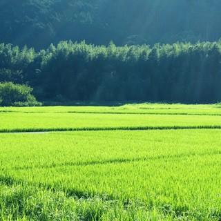 風光明媚な京の里山・京北(けいほく)で育てたお米です