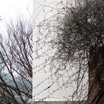 カフェ ラ・ボエム - 枝に留まる一羽