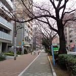 ラーメン二郎 - 千川通り~満開になったら綺麗だろうね~