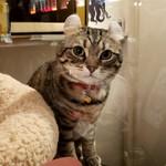 Cafe Chaton Rouge - 看板猫ジッタさん