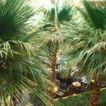 パシフィカ - 上から見てもジャングル(笑)