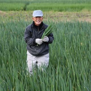 契約農家から直送!朝採れ九条ネギ系「緑宝黒葱」をたっぷり堪能
