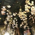 104655506 - 天井には、桜と豆電球が…