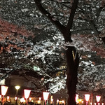 クラブハウスエニ - 目黒川の夜桜
