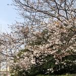 丸亀製麺 - 桜もいい感じ〜♪