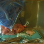 スターダスト - 内観写真:浜田や尾道で仕入れた活魚です! アナゴ刺やたこしゃぶが人気です。