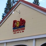 Dole Plantation -
