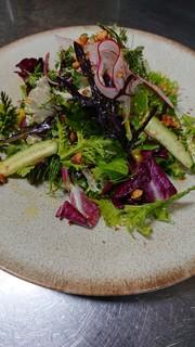 トランジット - 三浦野菜の彩りサラダ(季節野菜の為、仕入れにより変わります)