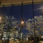 TRATTORIA CREATTA - 店内からの夜桜