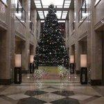 10503039 - ロビーのクリスマスツリー