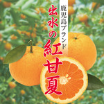 麹蔵 - 紅甘夏