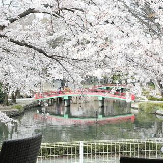 池や木々を眺めながら食事を愉しめます。