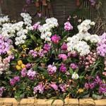 105181979 - 温室内は、お花が満開です