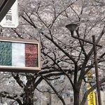 センプリチェ - 内観写真:春のセンプリチェ