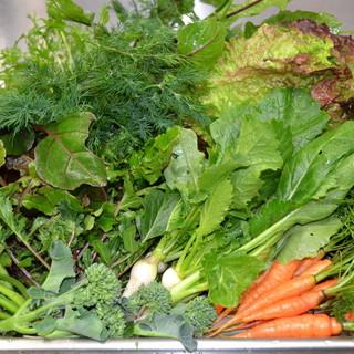 菌床栽培、無農薬・有機栽培野菜をふんだんに使った中華料理