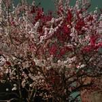 ラーメン炙り - 花桃